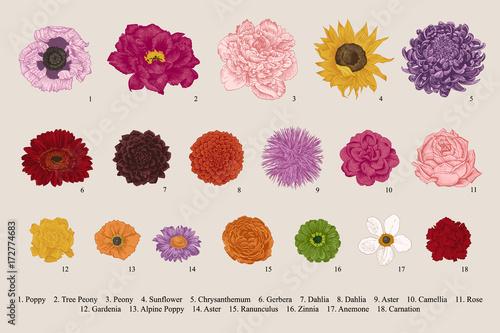 Photo  Flowers set