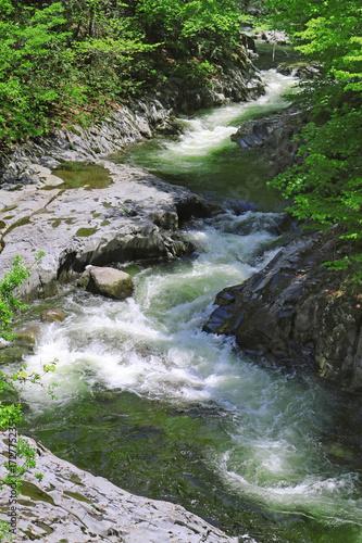 Foto op Aluminium Bos rivier 中津川渓谷(猪苗代町・裏磐梯)