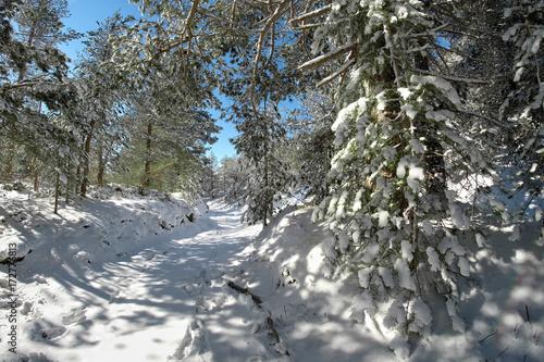 Fényképezés  Snowy Path In The Etna Park, Sicily