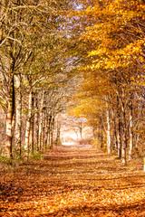 Obraz Autumn road