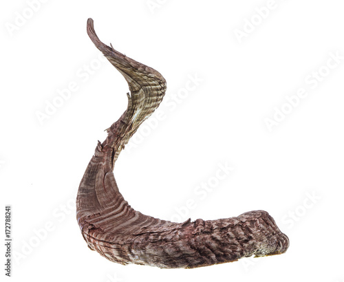 animal horn on white isolated background Wall mural