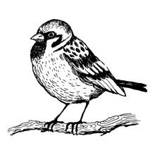 Sparrow Bird Engraving Vector Illustration