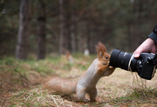 Cute Squirrel Plays With Digit...