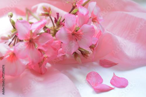 Fotografia  flowers rose geranium