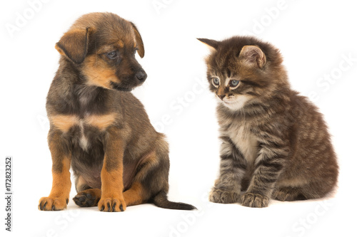kitten and puppy © fotomaster