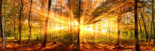 Canvas Prints Honey Herbstlandschaft Panorama: Wald mit goldenen Sonnenstrahlen