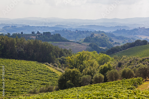 Foto  Magnificent view of picturesque Tuscany landscape with vineyards, cypress and ol