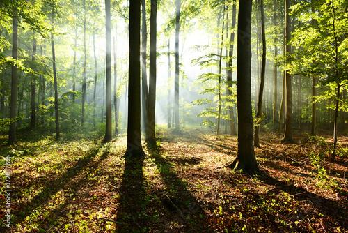 Fototapeten Wald Morning in the forest