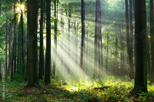 Foto auf Leinwand Wald Morning in the forest