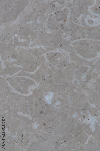 Valokuva Limestone with fossils texture