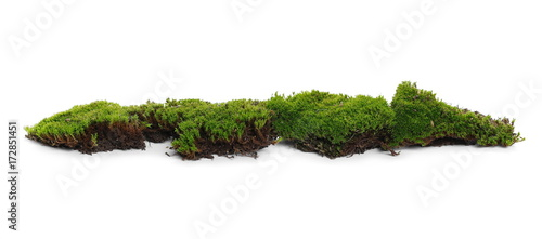 Photo Stands Bonsai Green moss isolated on white background