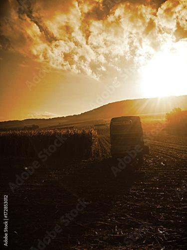 Staande foto Meloen sunset