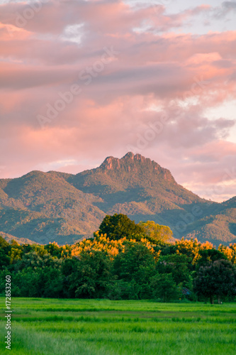 In de dag Lichtroze Beautiful sunset and dark clouds on rice fields with trees and big mountain background in Phrae Thailand.