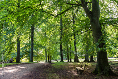 Photo  Beech forest with green leafs, a road and a bench in Denmark