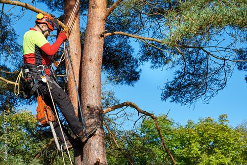 Klettergurt Mit License : Baumkletterer mit säge und klettergurt holzfäller bei der arbeit