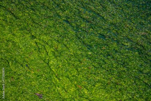 Foto op Plexiglas Groene sea water texture