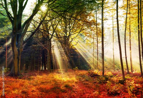 Foto op Plexiglas Bruin Herbstwald, Lichtung im Nebel