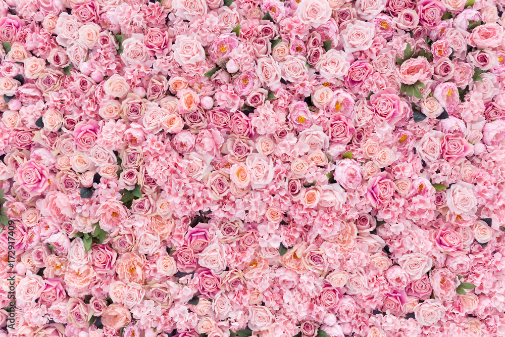 Fototapeta Beautiful Pink flowers background