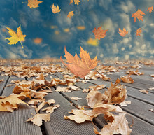 Autumn Winter Background Leaves Wind Weather