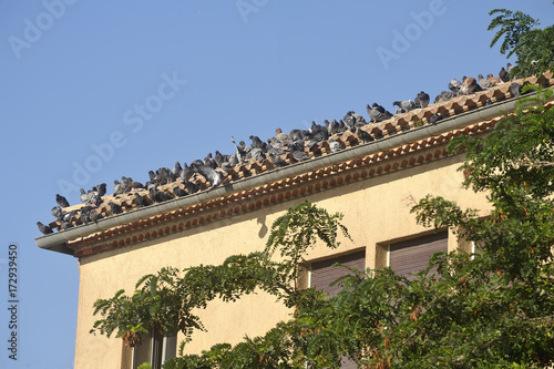 a large number of pigeons on the roof