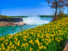 Yellow Flowers Niagara Falls