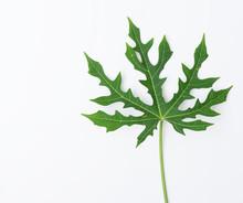 Flat Lay Green Leaf Pattern On...