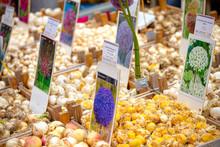 Bulbs For Sale In Bloemenmarkt (Amsterdam)