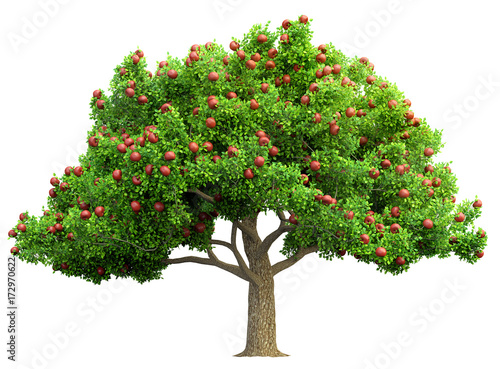 Fototapeta red apple tree isolated 3D illustration