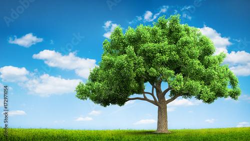 błękitne niebo i letnie zielone pole
