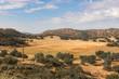Golden fields, buckwheat, oaks, thunder rain clouds