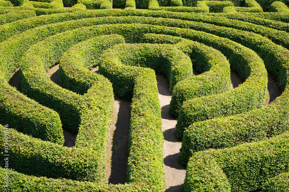 Fototapeta Green bushes maze view from above for garden.