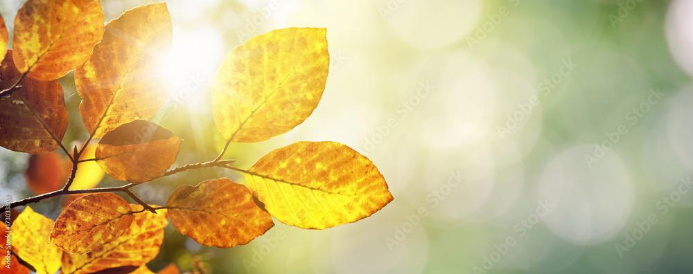 Fototapety, obrazy: Herbst