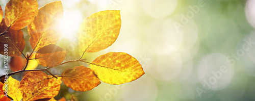 Photo Stands Yellow Herbst