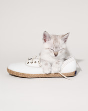 Sleeping Cat On A White Shoe