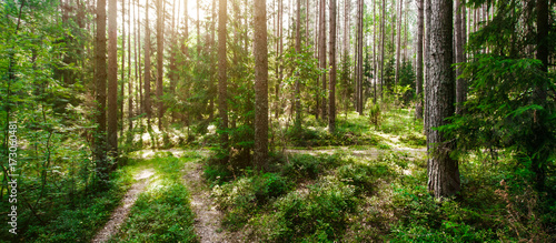 Foto op Canvas Weg in bos Wild trees in forest