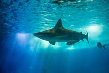 Underwater Blue Background Wit...