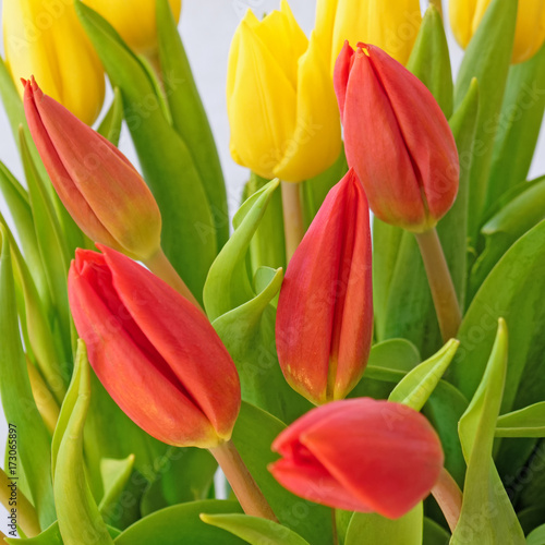 red-and-yellow-tulips-closeup