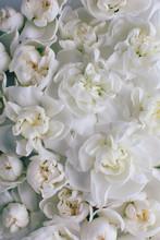 A Lot Of White Flowers. Springtime.