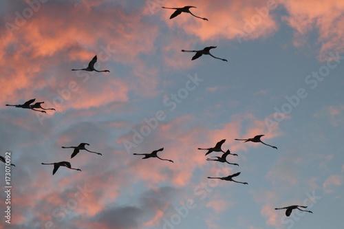 Fenicotteri in volo al tramonto