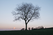 Tree On A Hilltop Above Matloc...