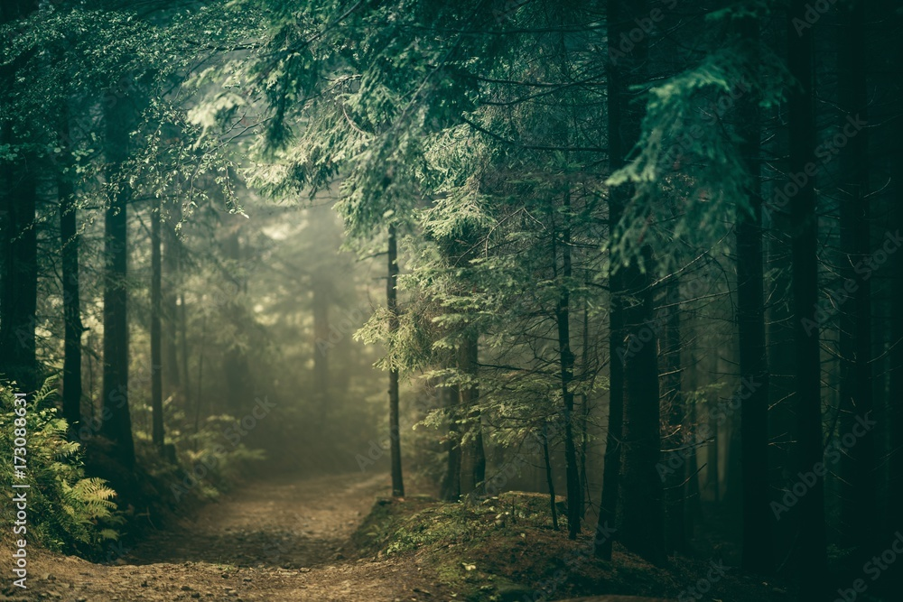 Fototapety, obrazy: Forest Countryside Road