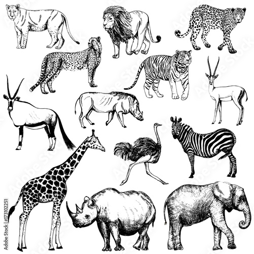 Set of hand drawn sketch style African animals and tiger Wallpaper Mural