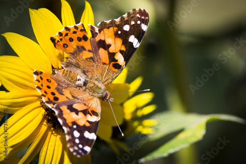 Plakat Fall Butterfly