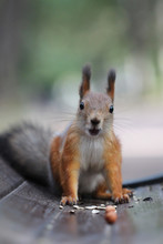 Surprised Squirrel Sits On A Bench