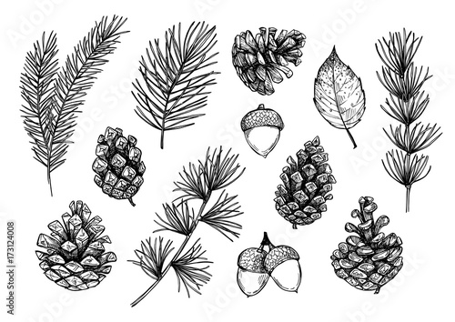 Obraz Hand drawn vector illustrations - Forest Autumn collection. Spruce branches, acorns, pine cones, fall leaves. Design elements for invitations, greeting cards, quotes, blogs, posters, prints - fototapety do salonu