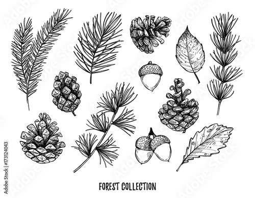 Fototapeta Hand drawn vector illustrations - Forest Autumn collection. Spruce branches, acorns, pine cones, fall leaves. Design elements for invitations, greeting cards, quotes, blogs, posters, prints obraz