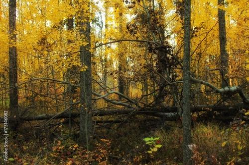 Foto op Plexiglas Oranje fall