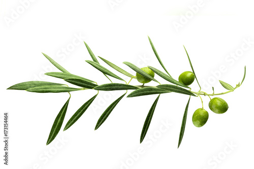 Vibrant olive tree branch with berries on white