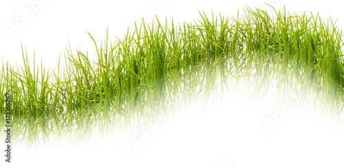 Keuken foto achterwand Paardenbloem herbes