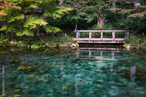 Fotografía  モネの池